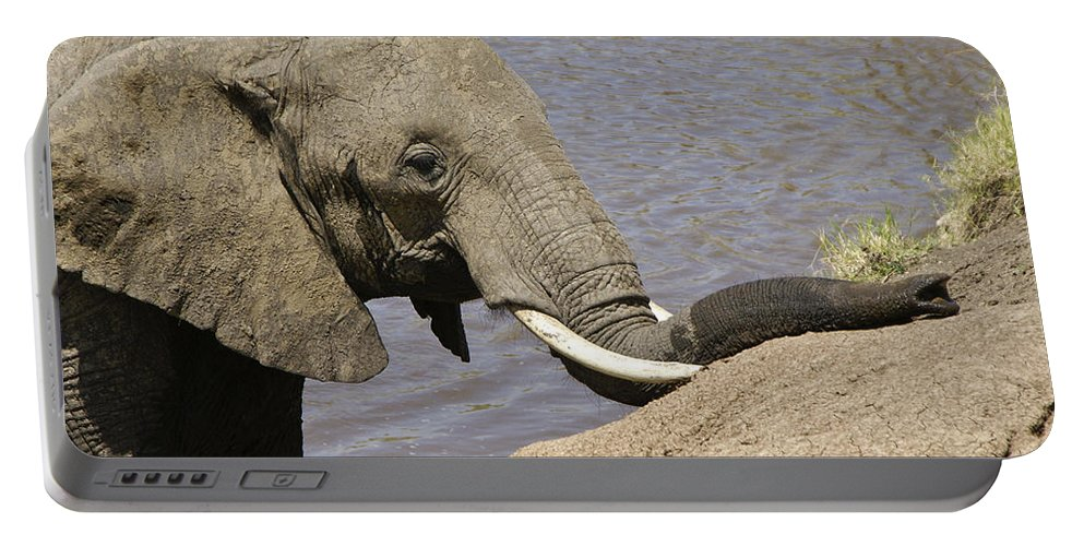 Africa Portable Battery Charger featuring the photograph My Trunk Needs Drying Out by Michele Burgess