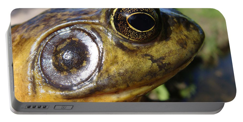 Frog Portable Battery Charger featuring the photograph My What Big Eyes You Have by Donna Blackhall