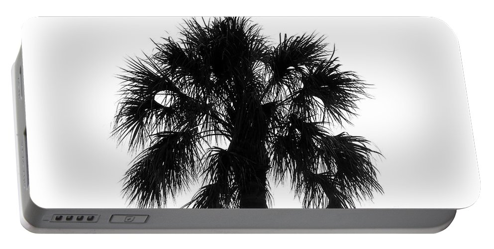 Palm Tree Portable Battery Charger featuring the photograph Naked Palm by David Lee Thompson