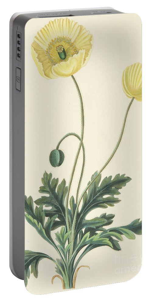 Poppy Portable Battery Charger featuring the drawing Naked Stalked Poppy by Margaret Roscoe