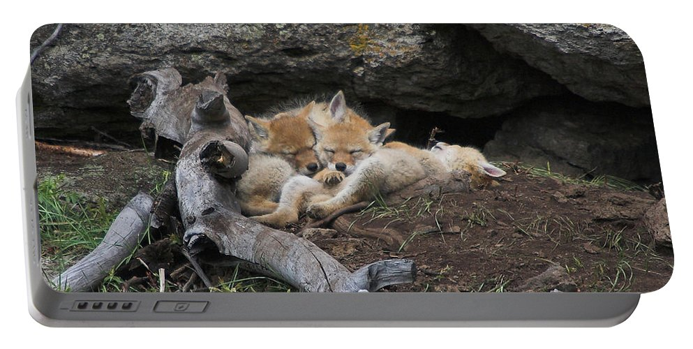 Coyote Portable Battery Charger featuring the photograph Nap Time by Steve Stuller