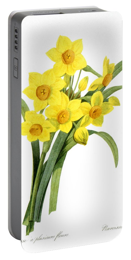 1833 Portable Battery Charger featuring the photograph Narcissus (n. Tazetta) by Granger