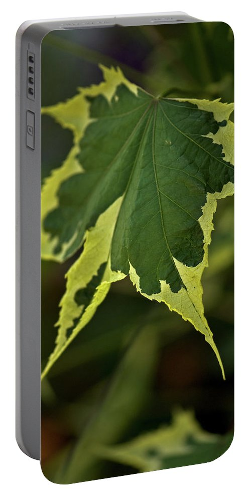 naturally Framed Portable Battery Charger featuring the photograph Naturally Framed by Paul Mangold