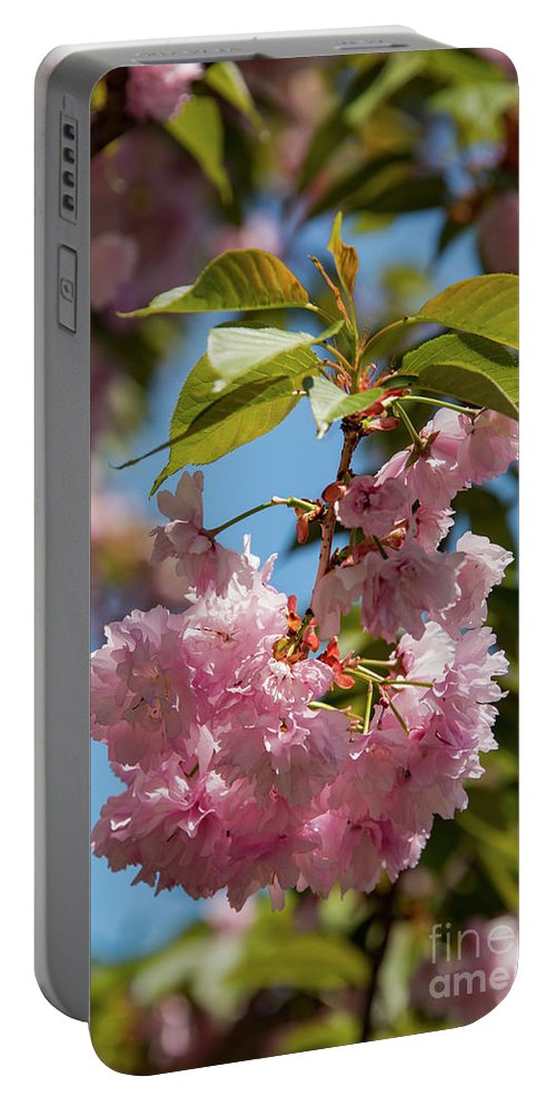 Hagerstown Maryland Kwanza Japanese Cherry Tree Trees Blossom Blossoms Bloom Blooms Nature City Park Parks Flower Flowers Nature Portable Battery Charger featuring the photograph Nature In Pink by Bob Phillips