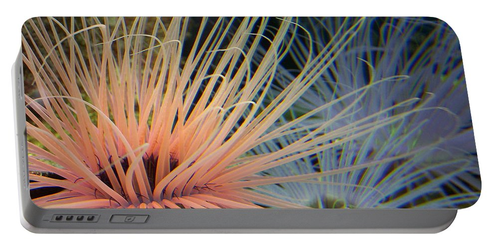 Nature Portable Battery Charger featuring the photograph Nemo by Kimberly Mohlenhoff
