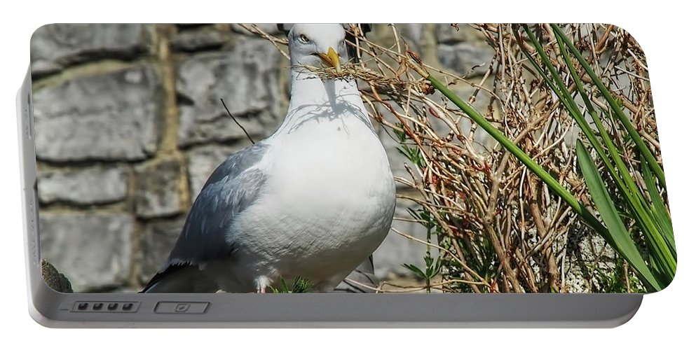 Seagull Portable Battery Charger featuring the photograph Nest Building Time by Susie Peek