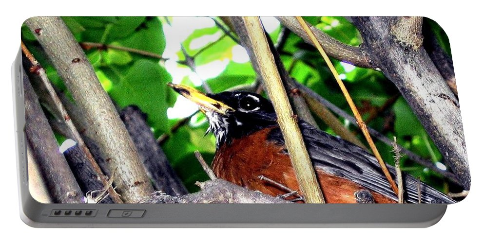 Robin Portable Battery Charger featuring the photograph Nesting Robin by Will Borden