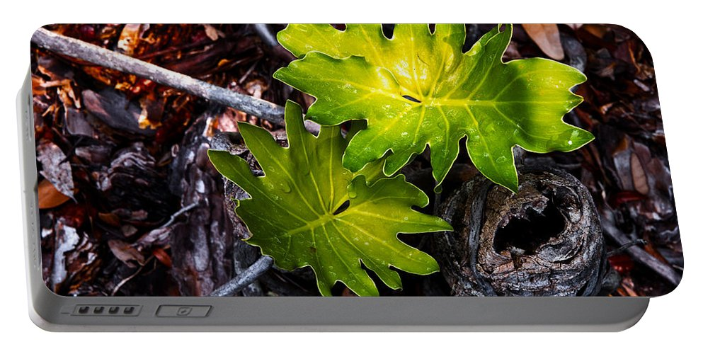 Plant Portable Battery Charger featuring the photograph New Growth by Christopher Holmes
