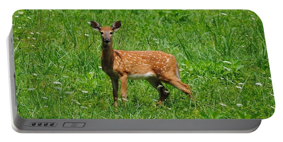 Fawn Portable Battery Charger featuring the photograph New Spots by Eric Liller