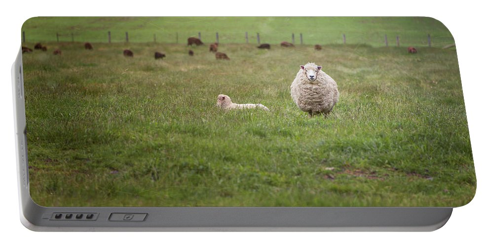 Joan Carroll Portable Battery Charger featuring the photograph New Zealand Sheep by Joan Carroll