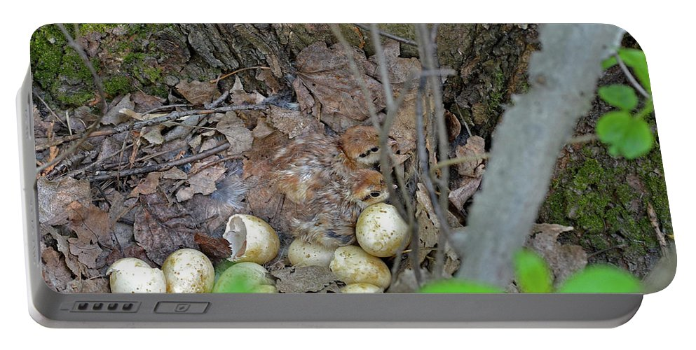 Ruffed Grouse Portable Battery Charger featuring the photograph Newly Hatched Ruffed Grouse Chicks by Asbed Iskedjian