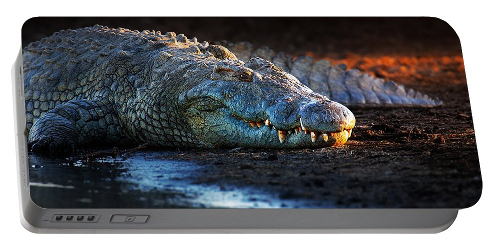 Crocodile Portable Battery Charger featuring the photograph Nile Crocodile On Riverbank-1 by Johan Swanepoel