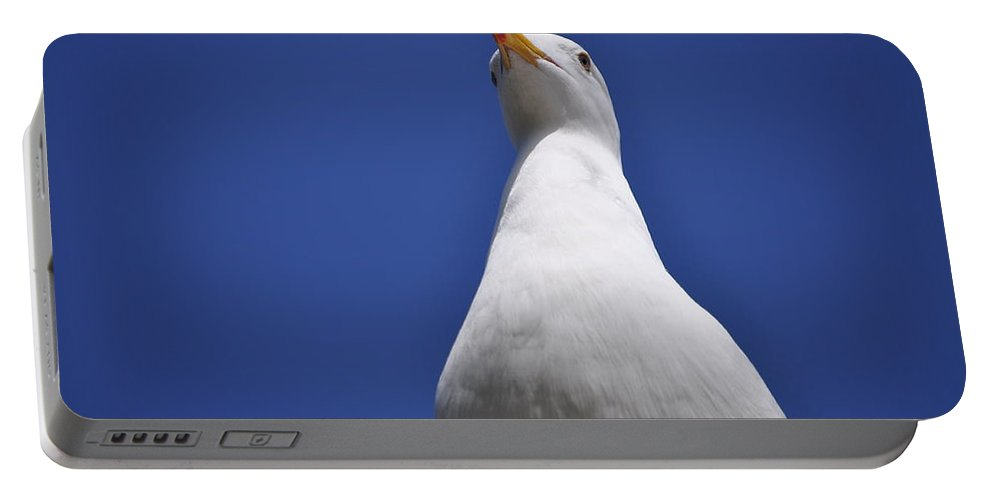 Seagull Portable Battery Charger featuring the photograph Noble by Bridgette Gomes