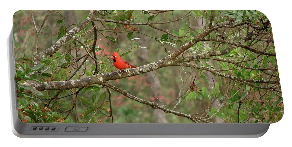 North Portable Battery Charger featuring the photograph North Carolina Cardnial by Brett Winn