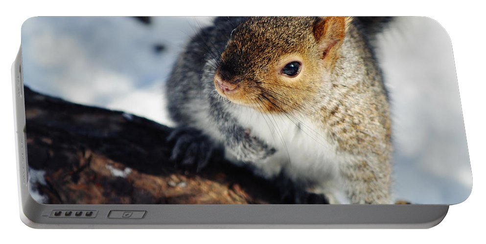 Chicago Portable Battery Charger featuring the photograph North Pond Squirrel by Kyle Hanson