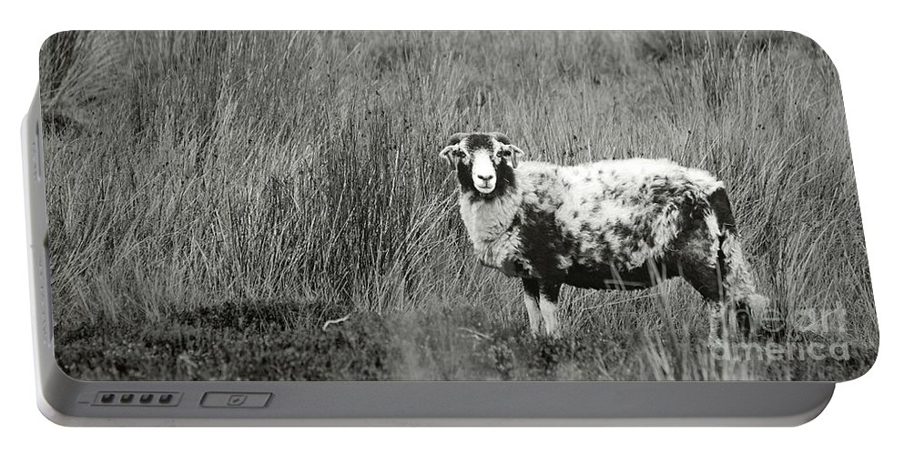 Sheep Portable Battery Charger featuring the photograph North Yorkshire Moors Sheep by Kate Sadler