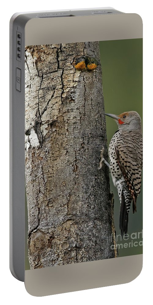 Northern Flicker Portable Battery Charger featuring the photograph Northern Flicker by Natural Focal Point Photography