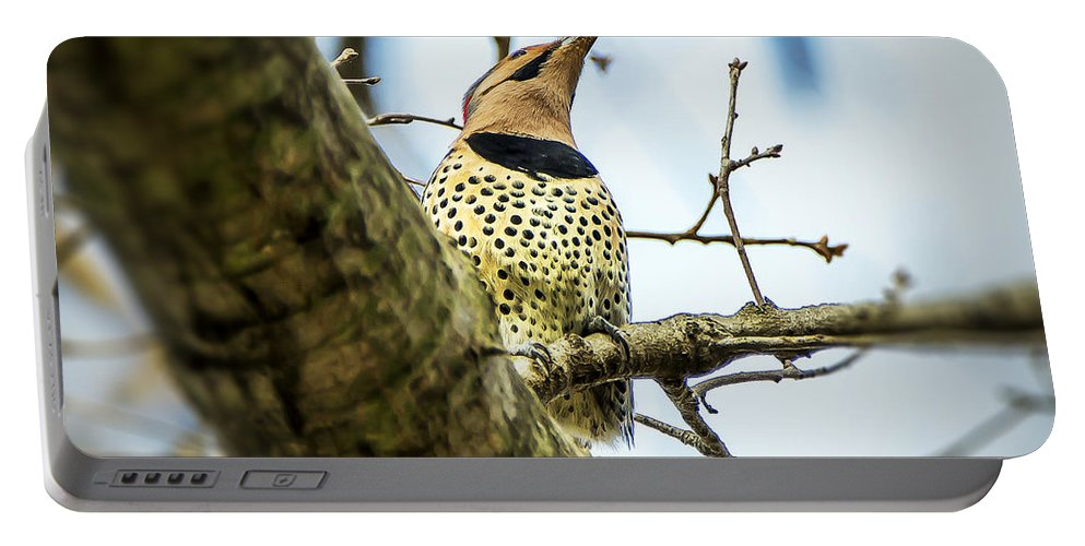 2d Portable Battery Charger featuring the photograph Northern Flicker - Woodpecker by Brian Wallace