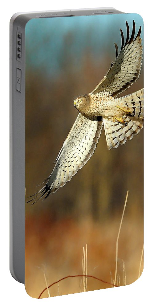 Northern Harrier Portable Battery Charger featuring the photograph Northern Harrier Banking by William Jobes