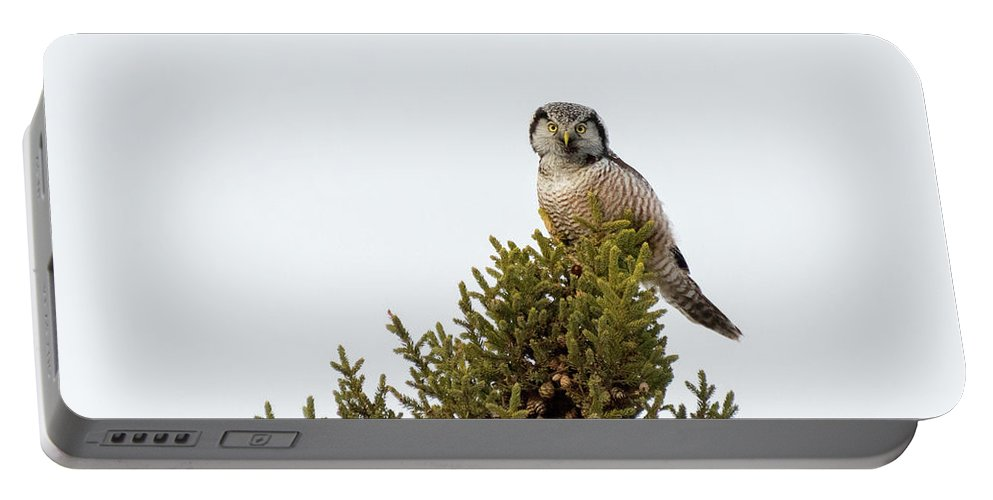 Mike Timmons Portable Battery Charger featuring the photograph Northern Hawk Owl by Mike Timmons