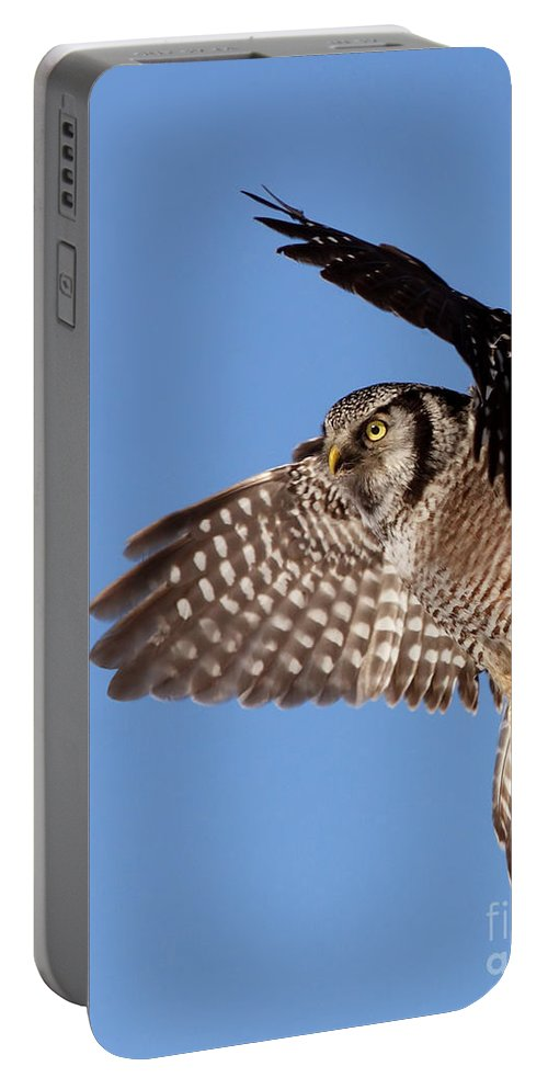 Animal Portable Battery Charger featuring the photograph Northern Hawk Owl by Mircea Costina Photography