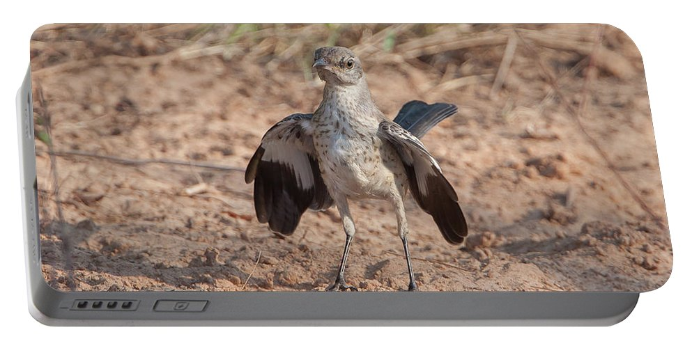 Ronnie Maum Portable Battery Charger featuring the photograph Northern Mockingbird by Ronnie Maum