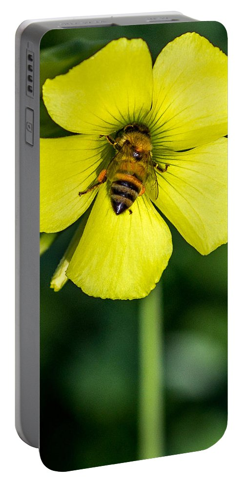 Honey Bee Portable Battery Charger featuring the photograph Nose Deep by Shawn Jeffries