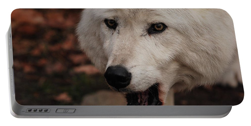 Wolf Portable Battery Charger featuring the photograph Not A Happy Face by Lori Tambakis