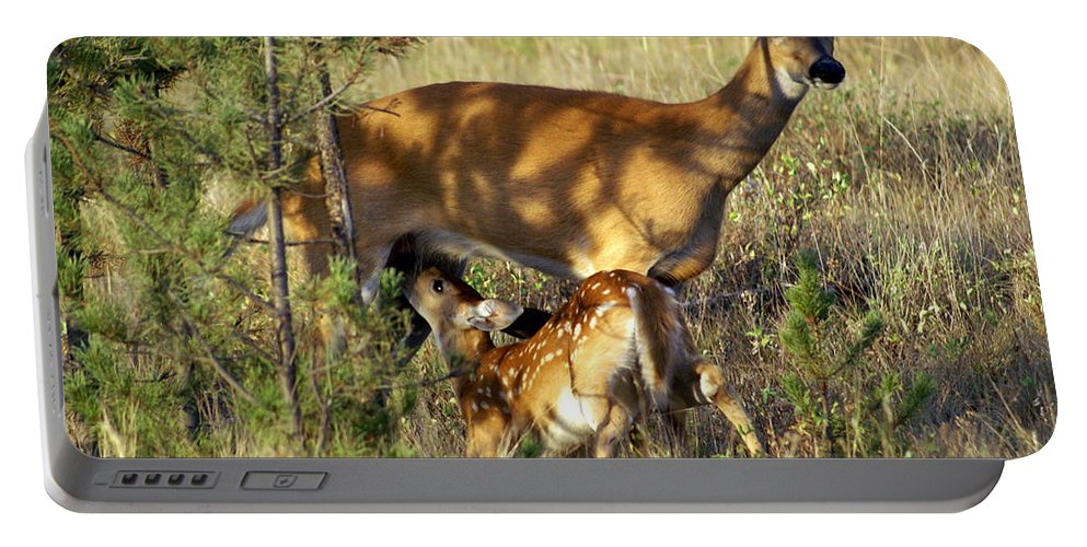 Deer Portable Battery Charger featuring the photograph Nursing Fawn by Marty Koch
