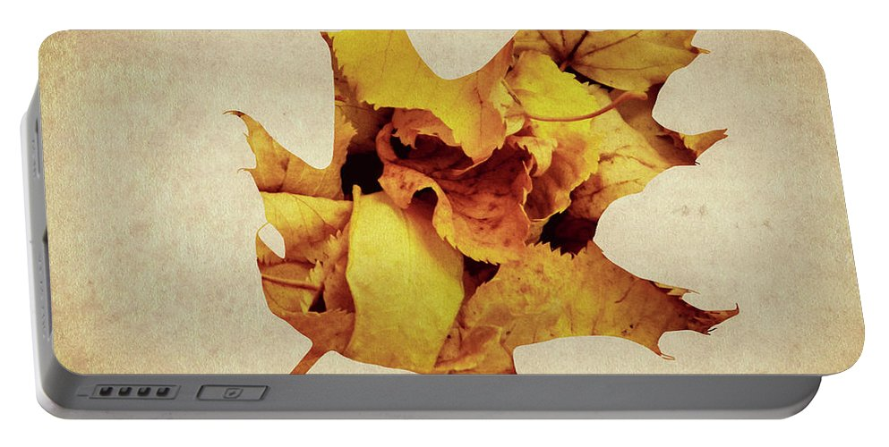 Isolated Portable Battery Charger featuring the photograph Oak Leaf by Andrea Anderegg