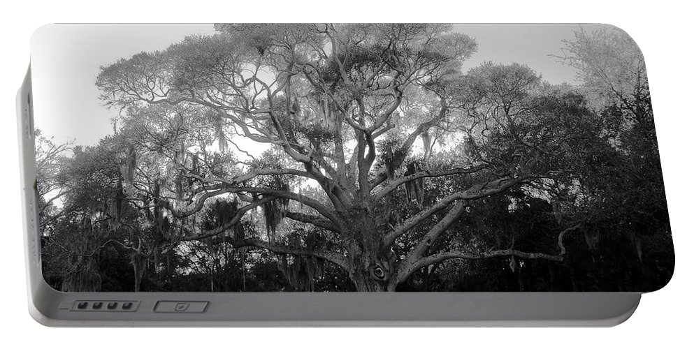Oak Tree Portable Battery Charger featuring the photograph Oak Tree by David Lee Thompson