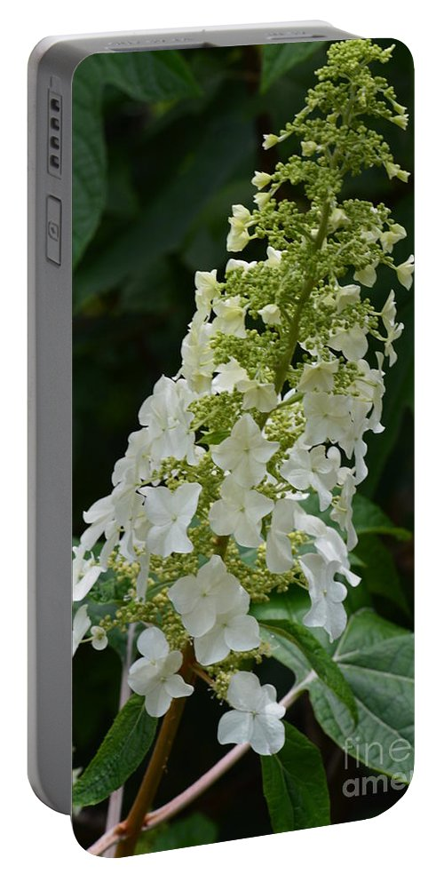 Oakleaf Hydrangea Portable Battery Charger featuring the photograph Oakleaf Hydrangea by Maria Urso