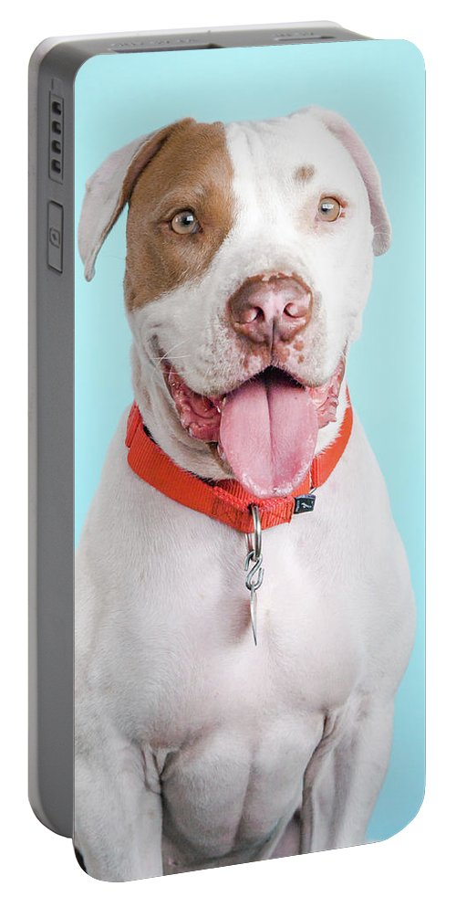 Dog Portable Battery Charger featuring the photograph Obi-wan_6637 by Pit Bull Headshots by Headshots Melrose
