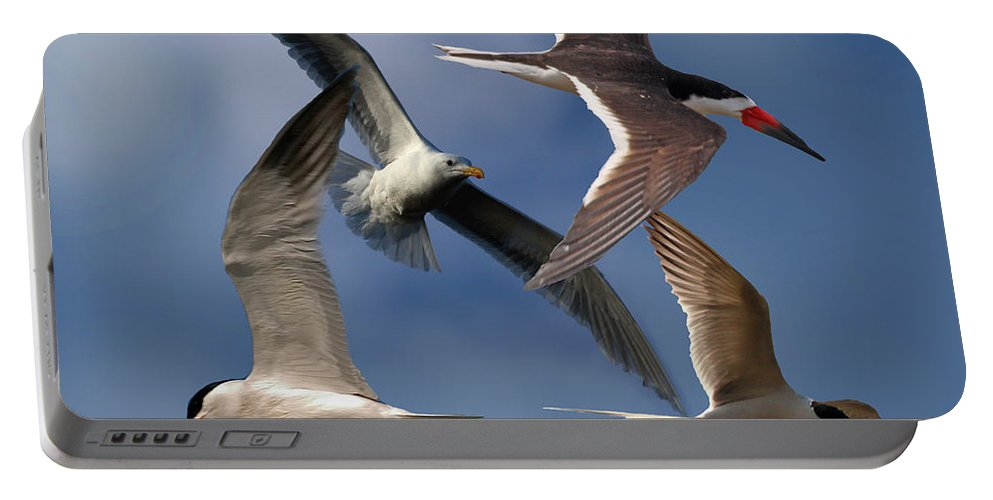 Sea Bird Collage Portable Battery Charger featuring the photograph Ocean Bird Collage by David Salter