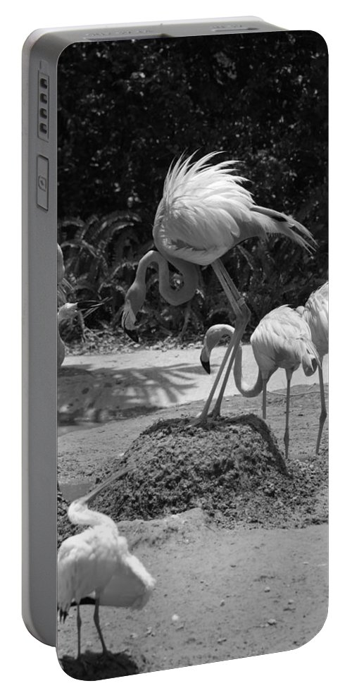 Animal Portable Battery Charger featuring the photograph Odd Bird Out In Black And White by Rob Hans