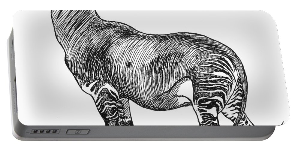 19th Century Portable Battery Charger featuring the photograph Okapi by Granger