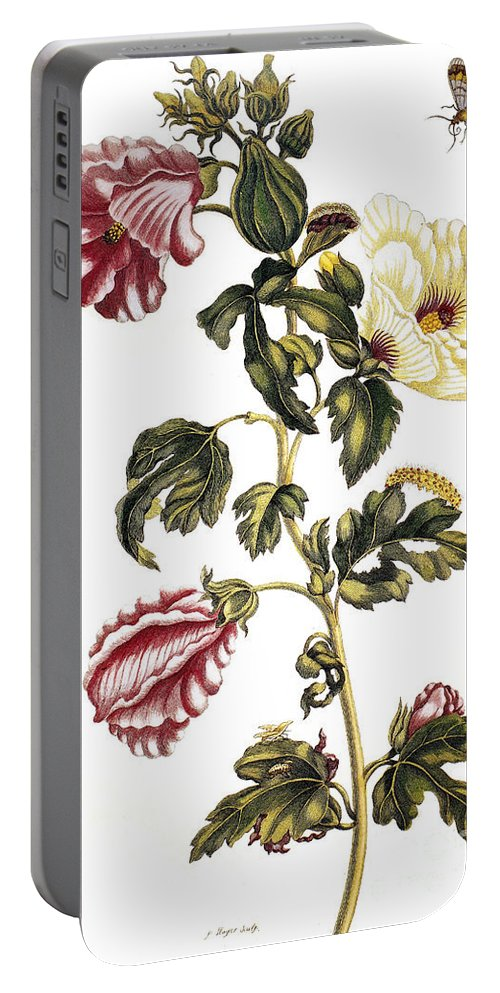 1705 Portable Battery Charger featuring the photograph Okra by Granger