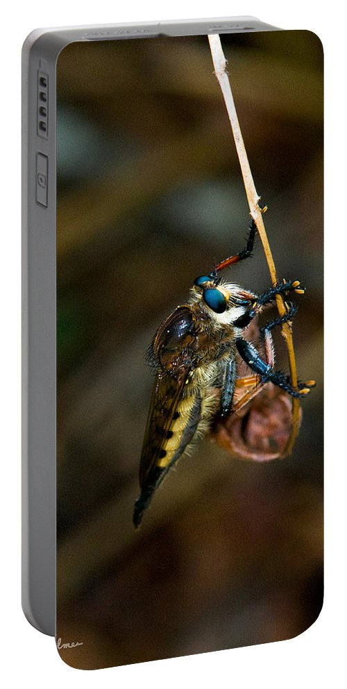 Bug Portable Battery Charger featuring the photograph Old Blue Eyes by Christopher Holmes