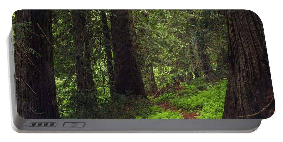 Idaho Scenics Portable Battery Charger featuring the photograph Old Growth Cedars by Leland D Howard