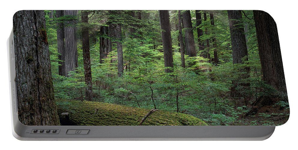 Beautiful Portable Battery Charger featuring the photograph Old Growth Forest by Leland D Howard