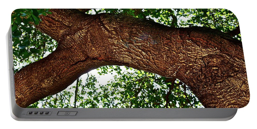 Tree Portable Battery Charger featuring the photograph Old Oak by Diana Hatcher