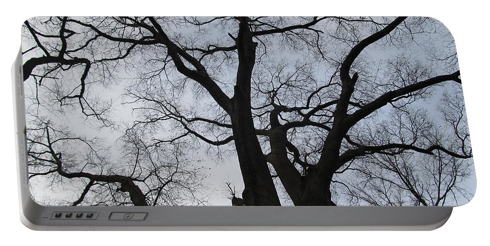 Winter Skyscape Overcast Old Oak Trees Oldgrowth Winter Oak Winter Trees Gray Sky Nature Prints Office Art Fine Art Forest Landscapes Treescapes Flora Portable Battery Charger featuring the photograph Old Oak Overcast by Joshua Bales
