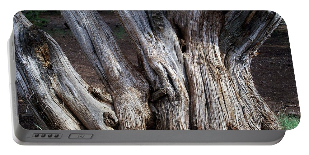 Old Tree Portable Battery Charger featuring the photograph Old Tree by Glenn Smith
