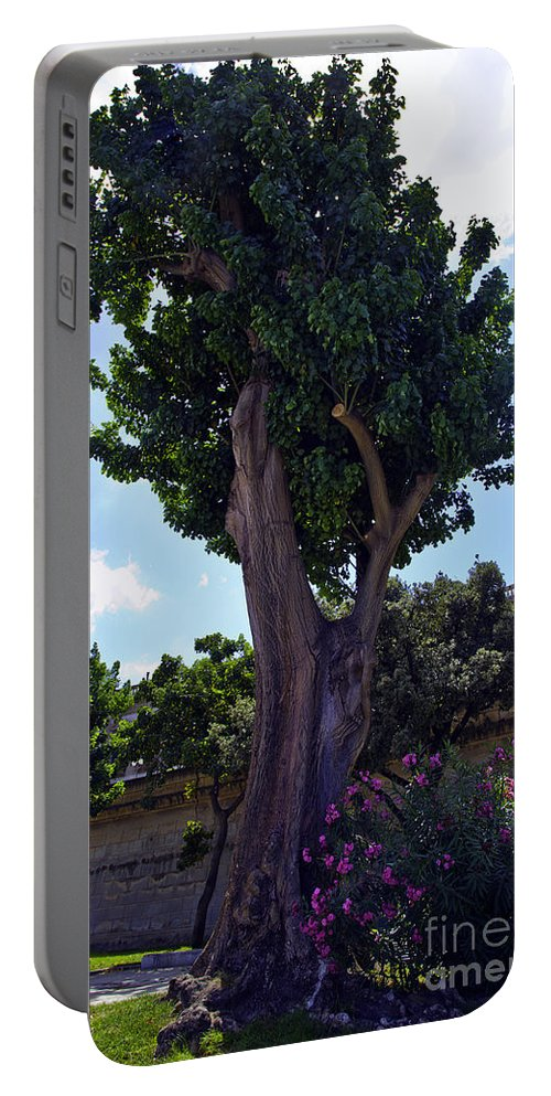Tree Portable Battery Charger featuring the photograph Old Tree In Palermo by Madeline Ellis