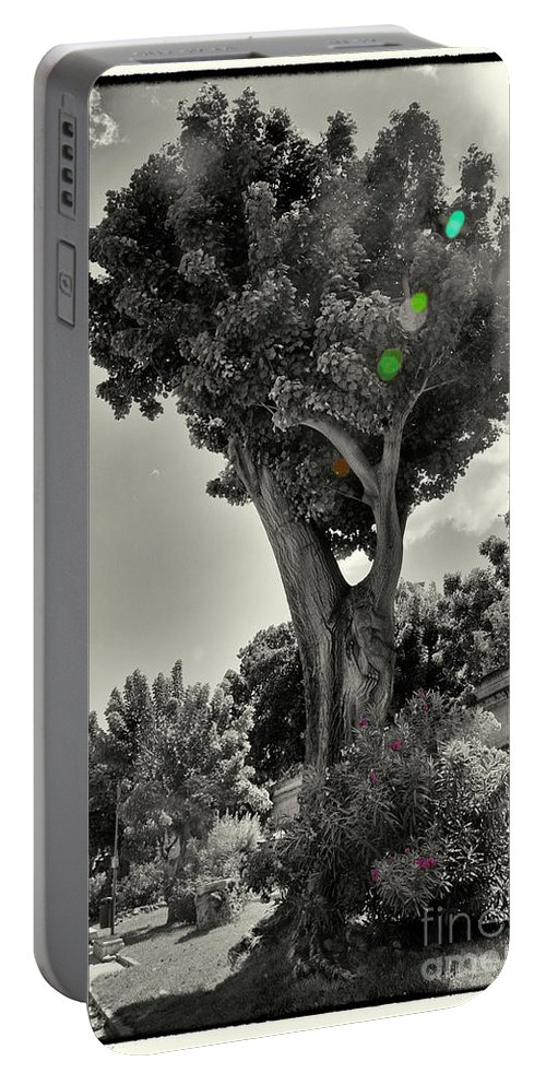 Tree Portable Battery Charger featuring the photograph Old Tree In Sicily by Madeline Ellis