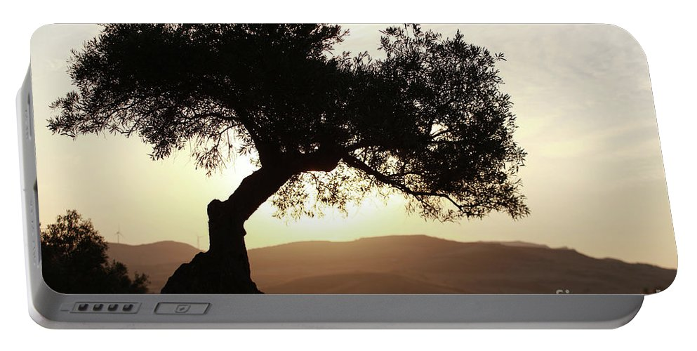 Olive Portable Battery Charger featuring the photograph Olive At Sunset by Jana Behr