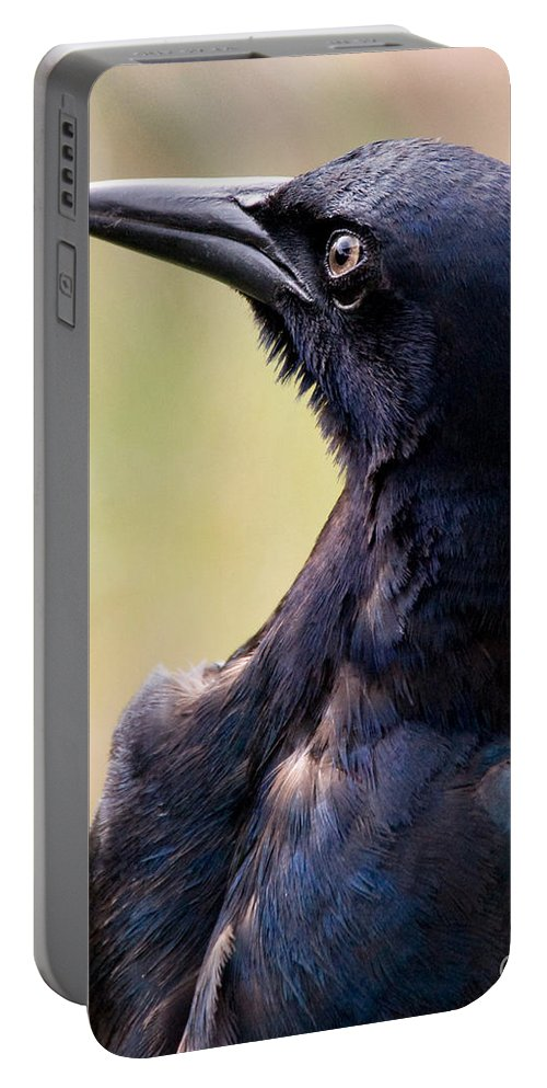 Bird Portable Battery Charger featuring the photograph On Alert by Christopher Holmes