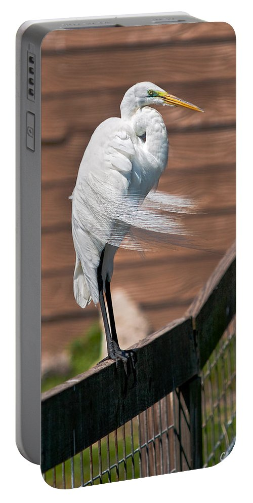 Avian Portable Battery Charger featuring the photograph On The Fence by Christopher Holmes