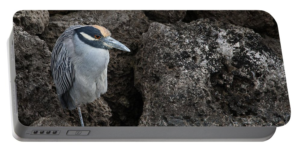 Heron Portable Battery Charger featuring the photograph On The Rocks - Yellow-crowned Night Heron by Mitch Spence