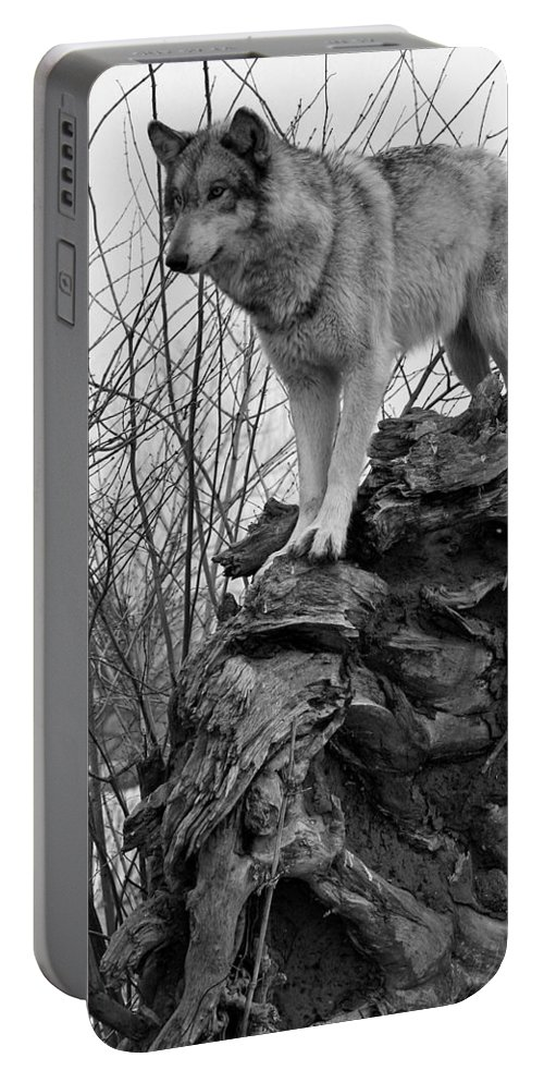 Black White Wolf Wolves Animal Wildlife Mammal Photography Photograph Canis Lupis Grey Timberwolf Portable Battery Charger featuring the photograph On Top by Shari Jardina